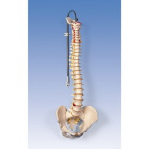 COLONNE VERTEB.FLEXI bas.homme +support